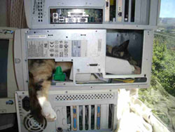 Cat-Powered Computer